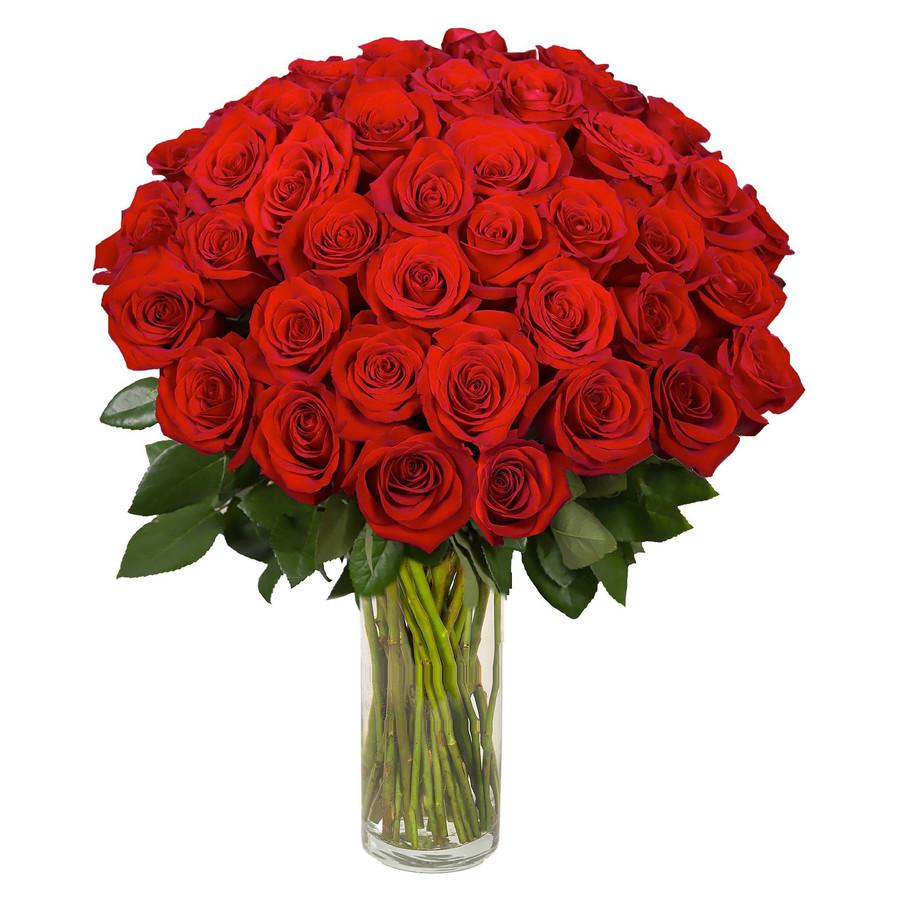 некачественных фотографий шикарный букет из алых роз фото основном, как место